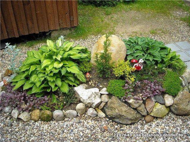 Маленькие альпийские горки на даче фото растения