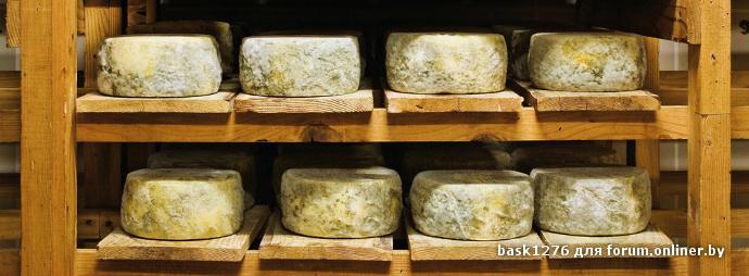Созревания сыра своими руками