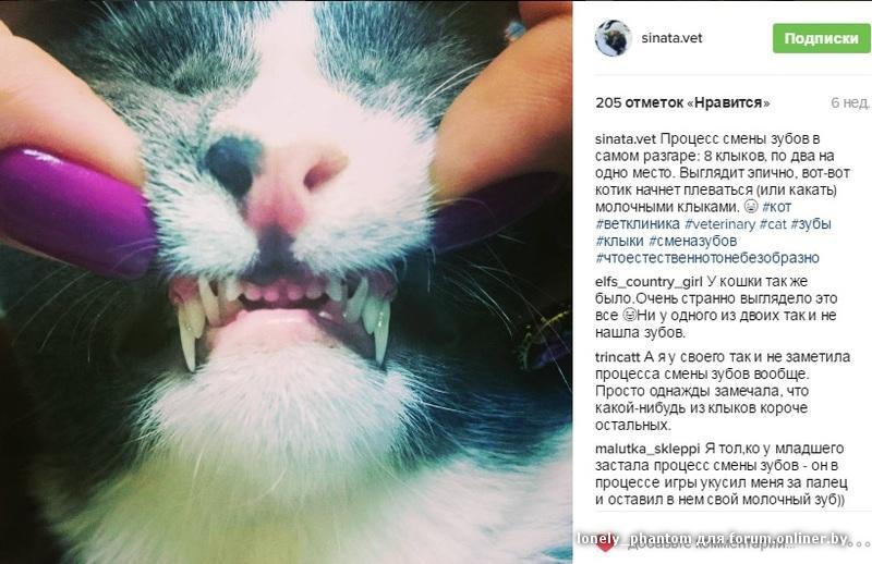 Если у кота выпал зуб он вырастет