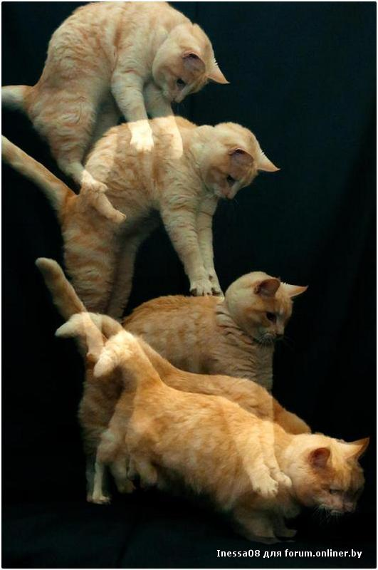 Почему кошки падают на лапы
