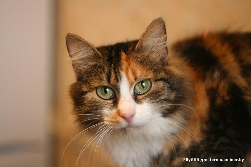 Кошка Маша открыла после реставрации музей-усадьбу