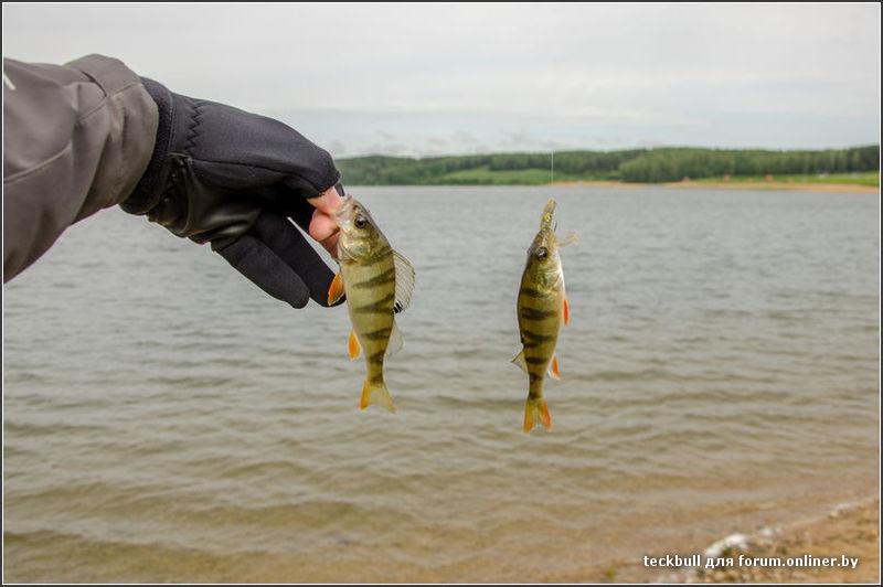 онлайнер форум рыбалка