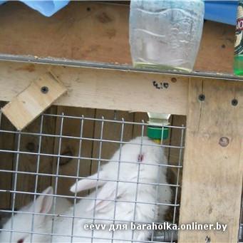 Как сделать поилку для кролика своими руками