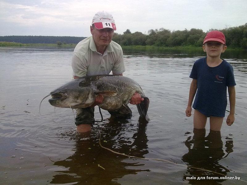 река березина рыбалка видео