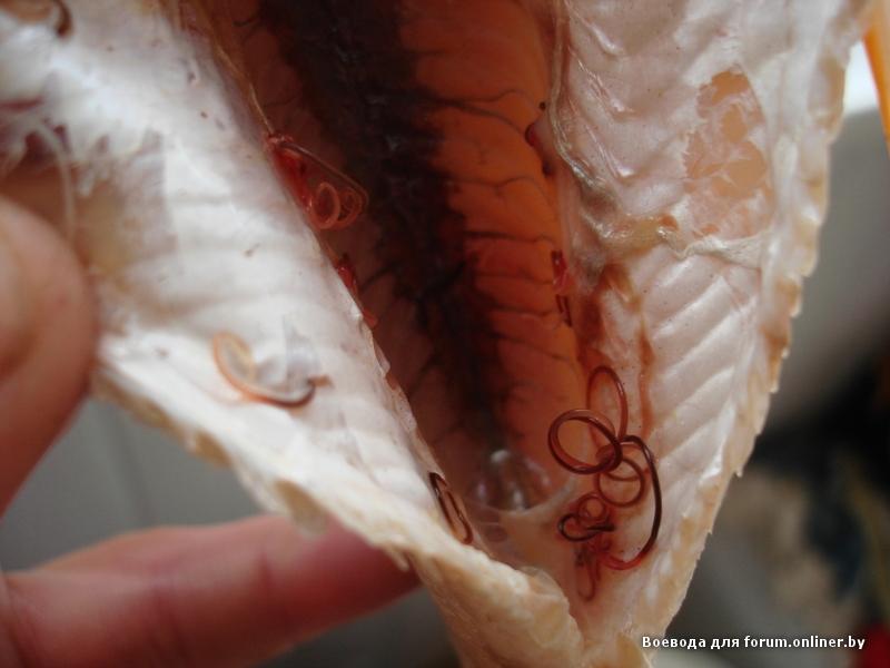тройчатка эвалар от паразитов