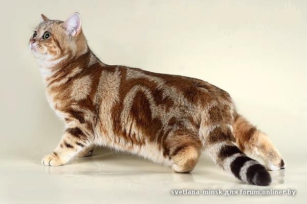 Форум про котов