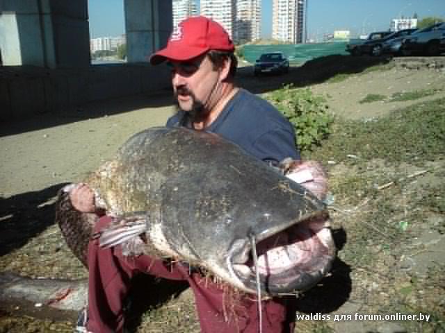 рыба в краснодаре рыбалка