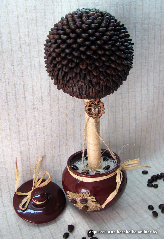 Кофейное дерево из зерна в домашних условиях 490