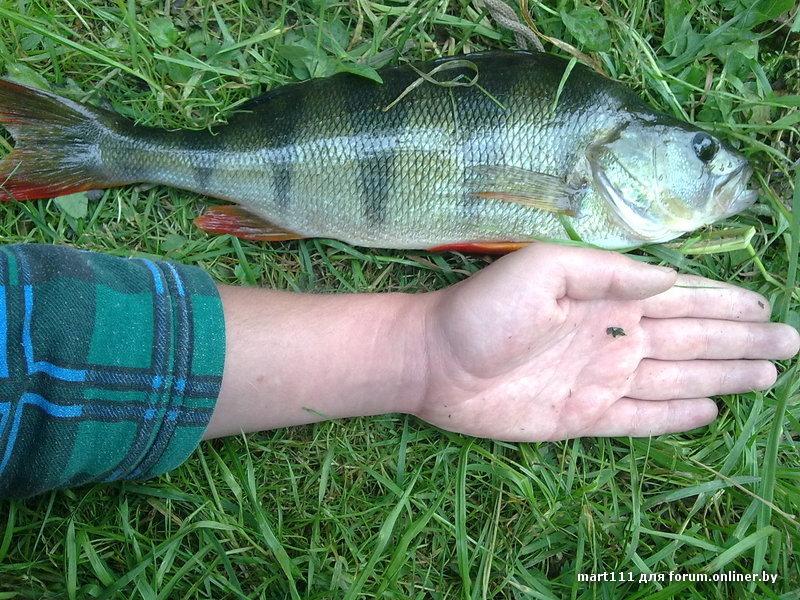 рыбалка получай онлайнере
