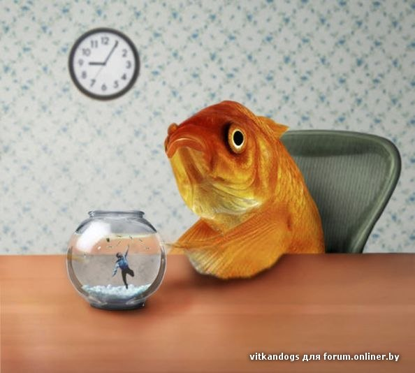 Gallery fish out of water