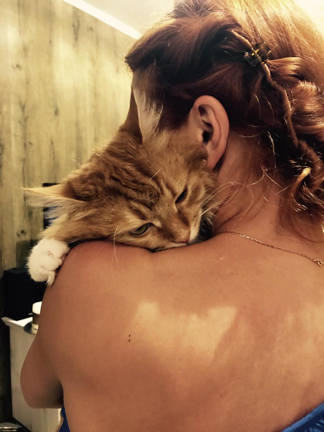 Почему котам нравятся волосы