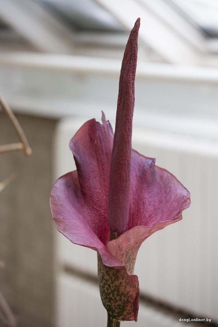 Цветок с запахом