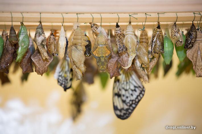 Набор для выращивания тропических бабочек 88