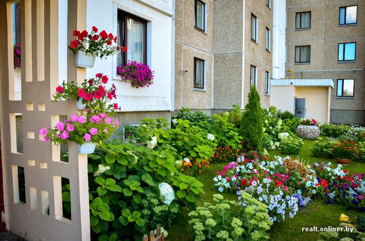 цветы комнатные елочка фото