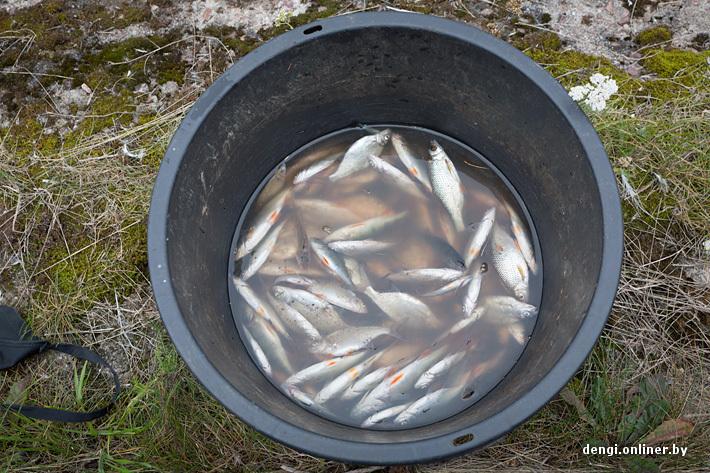 во сколько клюет рыба