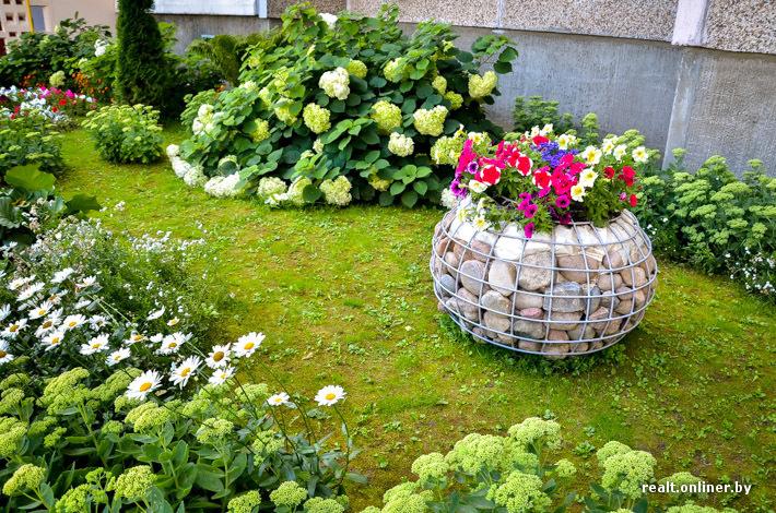 Клумбы около дома своими руками фото и названия цветов