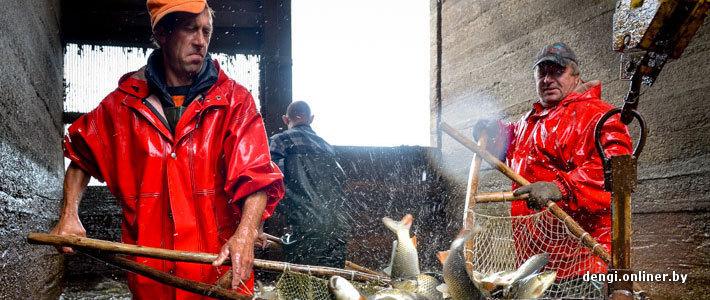 Ловцы грез: репортаж из белорусского рыбхоза