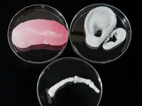 Как работают клетки нашего организма - 3384