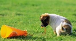 Коммунальщики: строительство новых площадок для выгула собак в крупных городах невозможно. Заботиться надо о людях