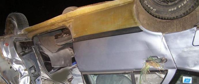 В Чаусском районе Fiat столкнулся с лосем, понадобилась помощь спасателей