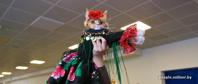 Воскресный позитив: фоторепортаж с шоу кошек в Минске