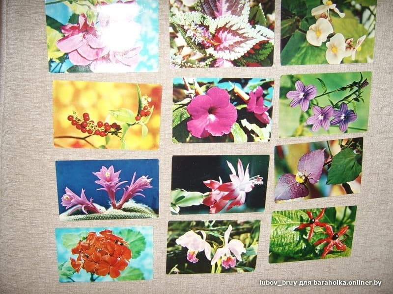 открытки набор открыток декоративные комнатные растения дня находился там