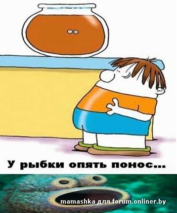 Картинка у рыбы понос