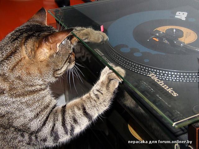 Cat scratch tv show wiki