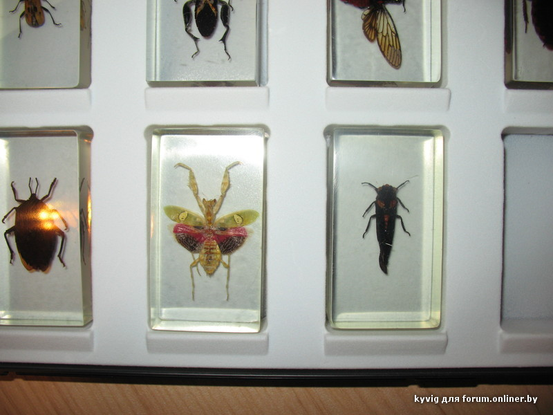 deagostini насекомые и их знакомые