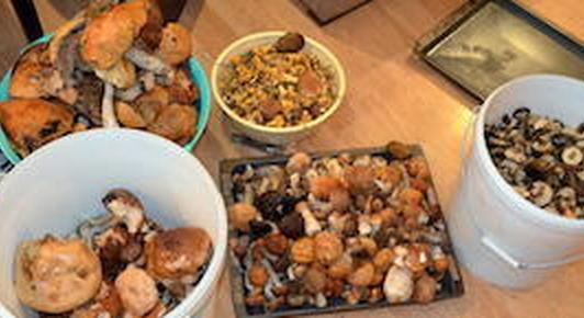 Белорусы потянулись в леса за грибами