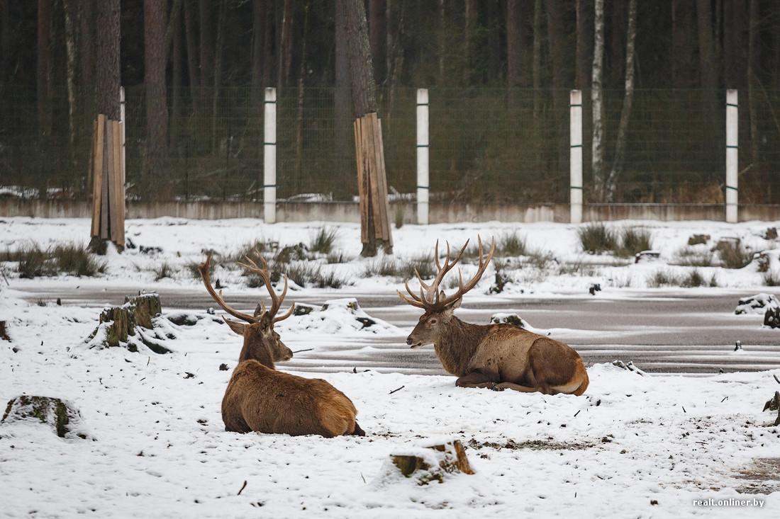 Беловежская пуща фотографии зимой