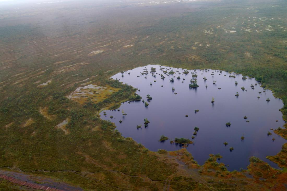 Marais biélorusse