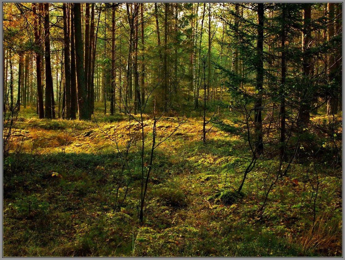 Forêt réserve naturelle biélorussie