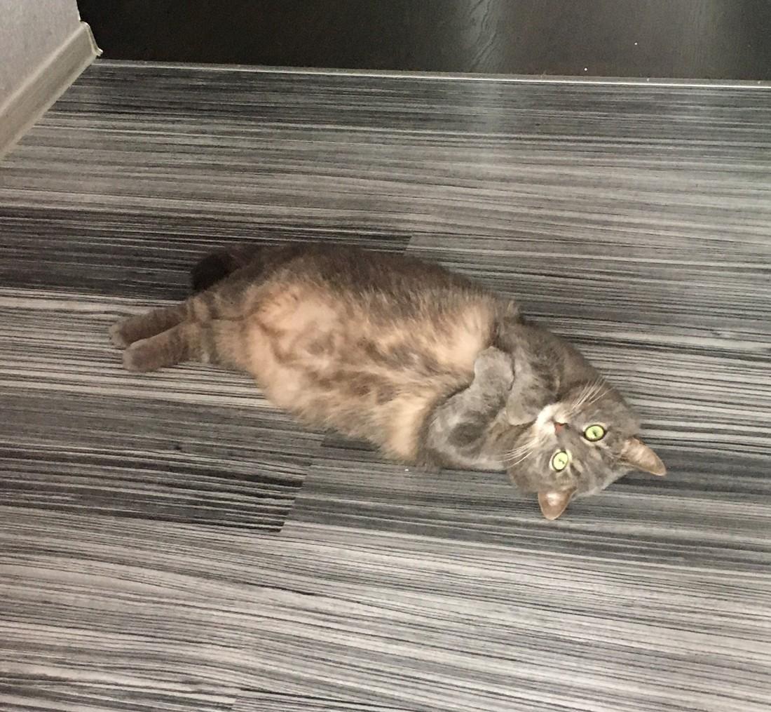 Как сделать так чтобы кот не умирал