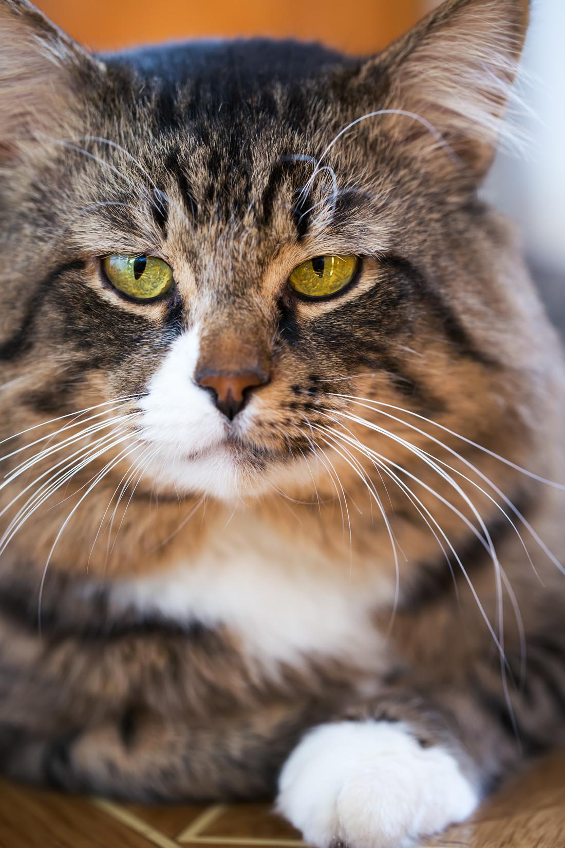 Кот ничего не ест 16 лет
