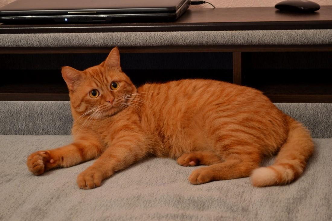 Чужой кот в квартиру зашел