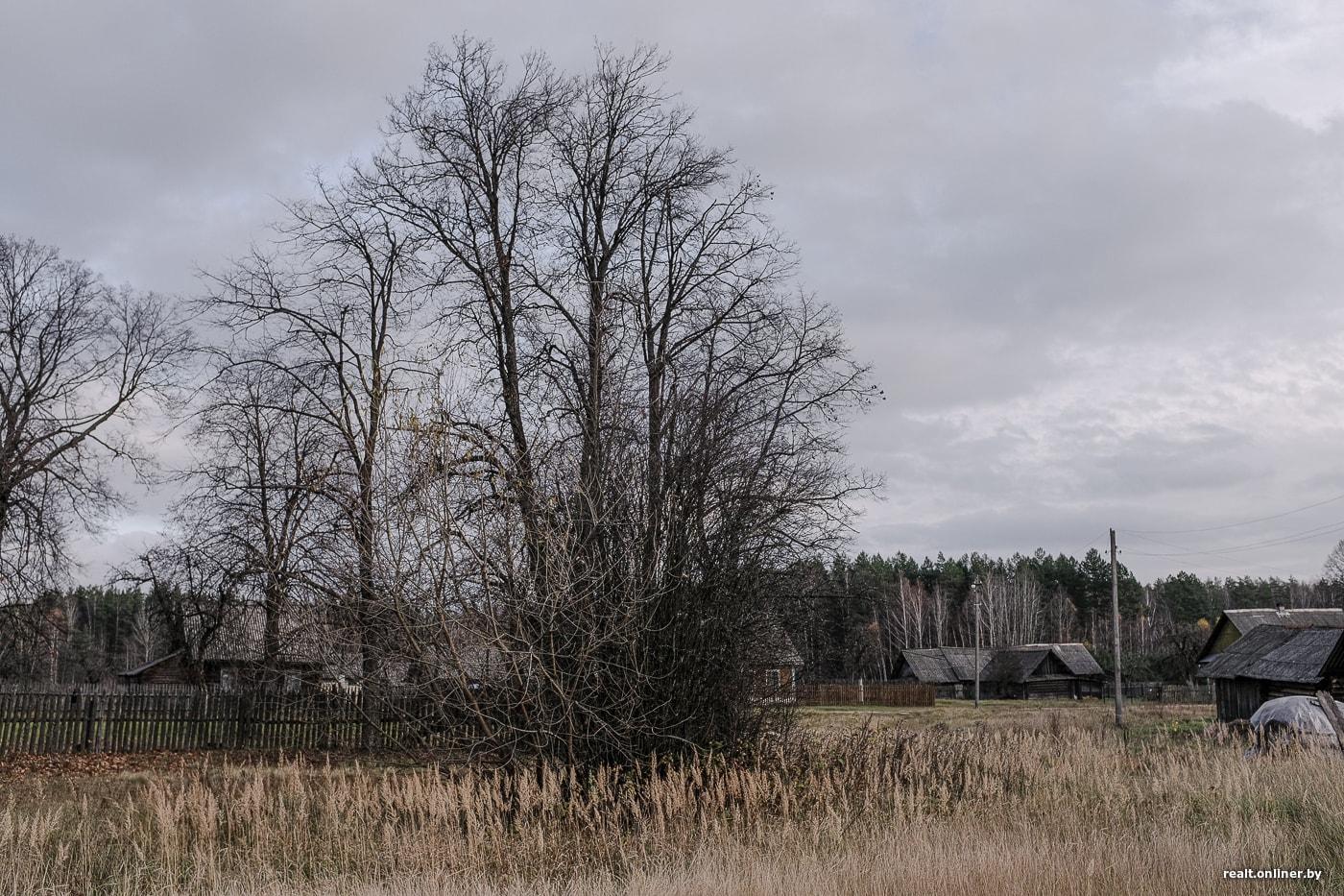 Сельчане из Борисовского района рассказали, как бороться с осенней хандрой 31