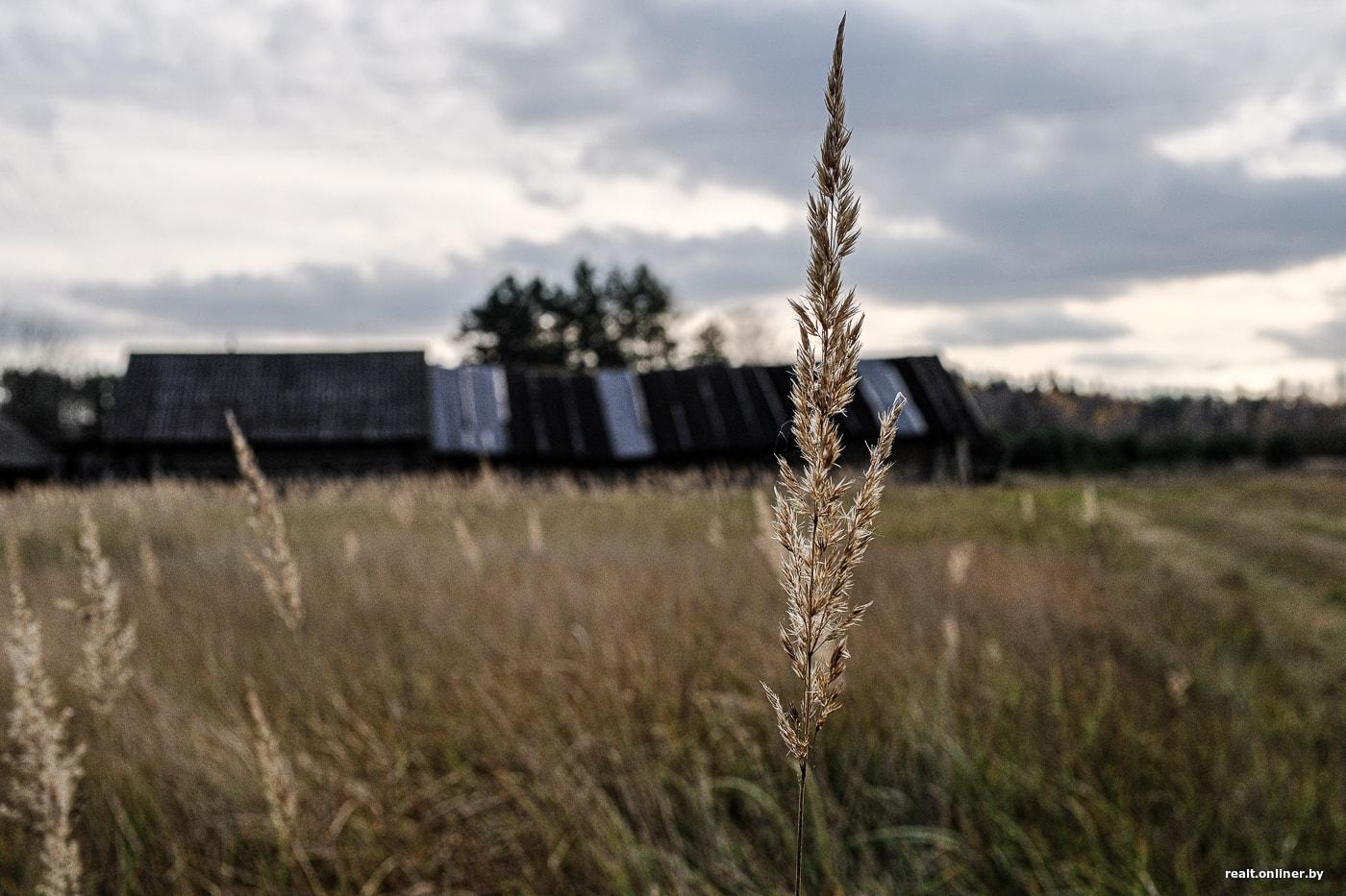 Сельчане из Борисовского района рассказали, как бороться с осенней хандрой 30