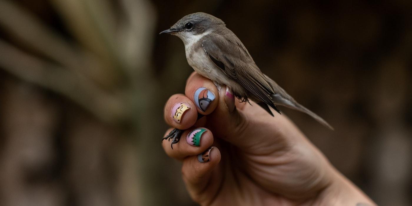 Посмотрите, как белорусы кольцуют диких птиц. Один день из жизни орнитолога