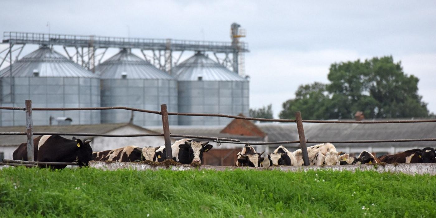 История про несчастных коров: что говорит начальство и что — контролеры?(42 фото)