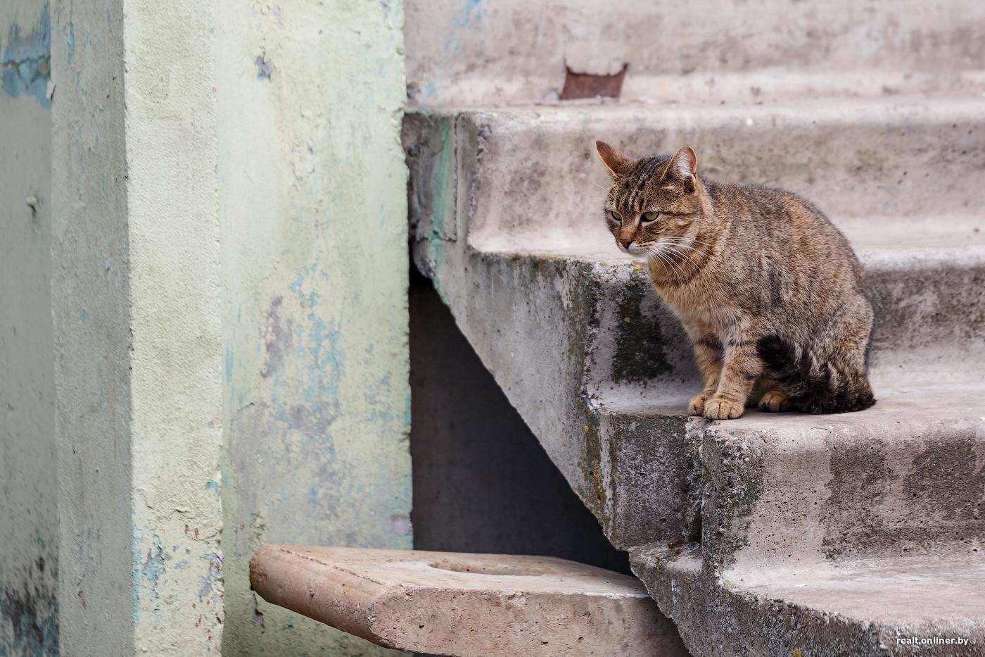 Отрава для кошек своими руками фото 872