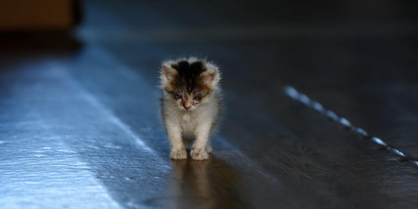 Зачем? Жительница райцентра собрала дома сотню котов и собак — потому что жалко