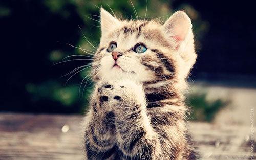 В США для выявления дыр в IT-безопасности используют фото котят