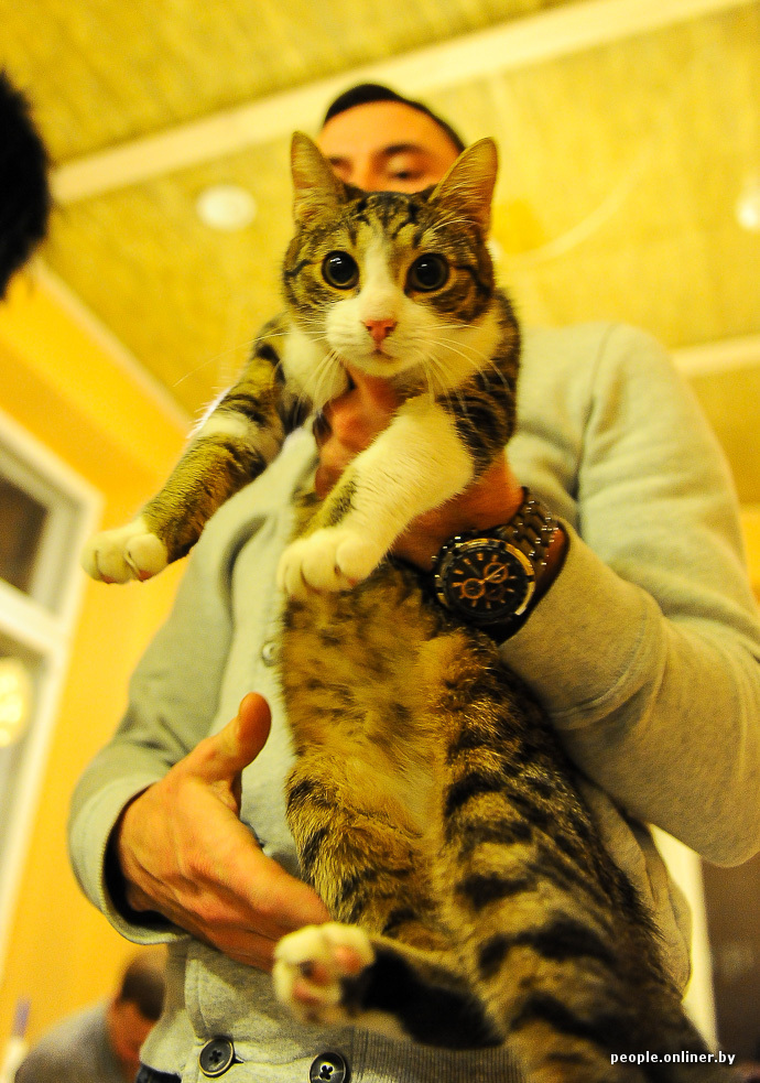 Позитив  белорусы открыли в Вильнюсе кошачье кафе 8b748be242b76