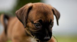 Обвиняемый в убийстве 4-месячного щенка получил пять суток ареста. Зоозащитники хотят опротестовать решение