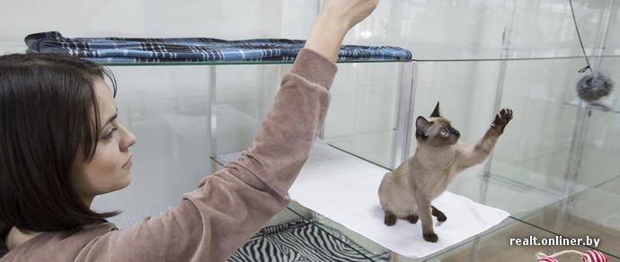 В Минске открылся кошачий отель: 150 тысяч рублей в сутки, стеклянные номера и видеонаблюдение онлайн