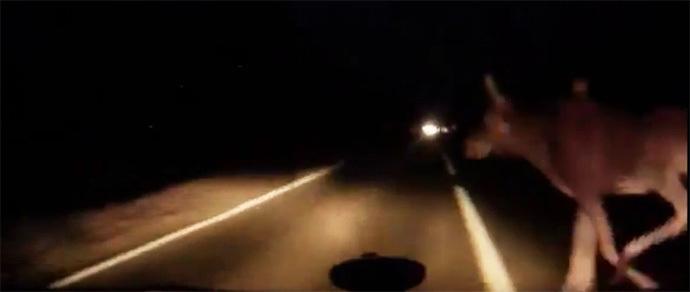 Водитель в последний момент увернулся от лося на загородной трассе