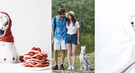 «О, 101 далматинец!» Чем живет самая популярная Instagram-собака Беларуси