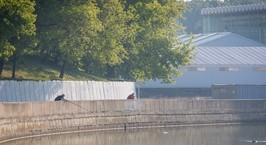 Из-за лесного пожара в Осиповичском районе Минск «накрыло» дымом и запахом гари