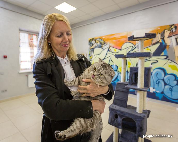 Музей кота отзывы минск